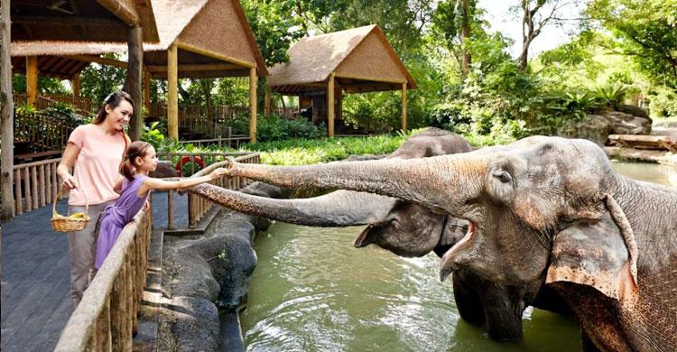 Singapur-Zoo